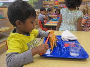 Practical Life activities hone concentration and fine motor skills.